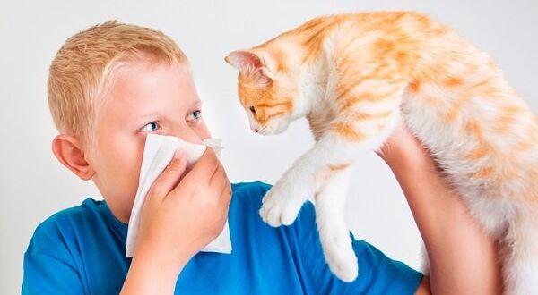 Аллергия у ребенка на животное