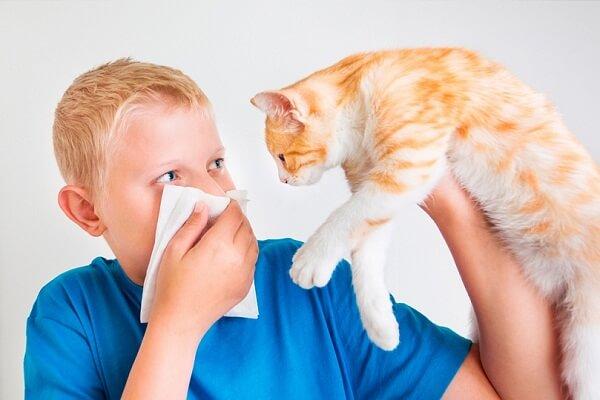 Аллергия на шерсть животных: симптомы и методы лечения. Аллергия на кошек: симптомы у взрослых